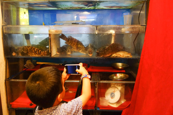checking out the fish at Royal Seafood Restaurant